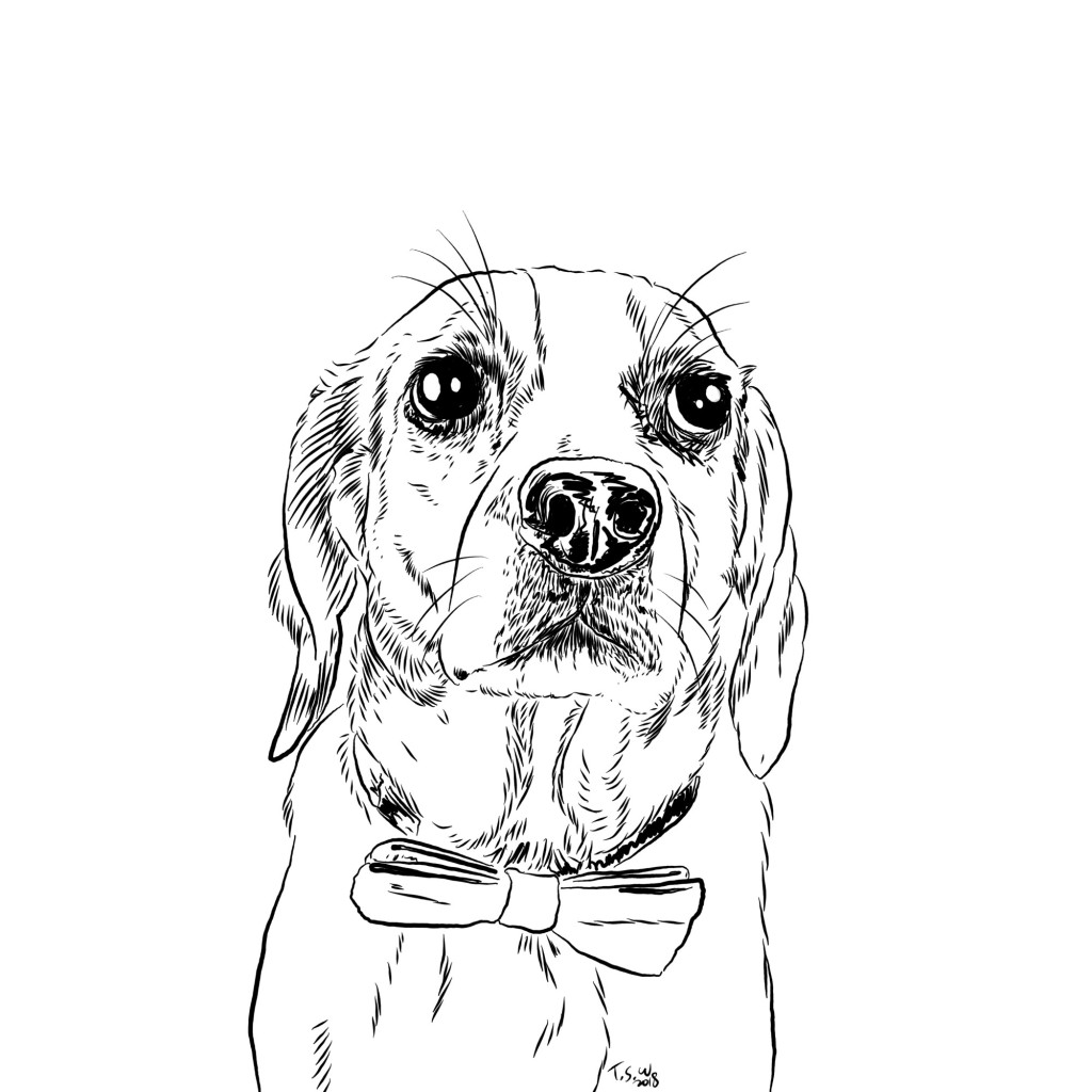 Beagle Illustration