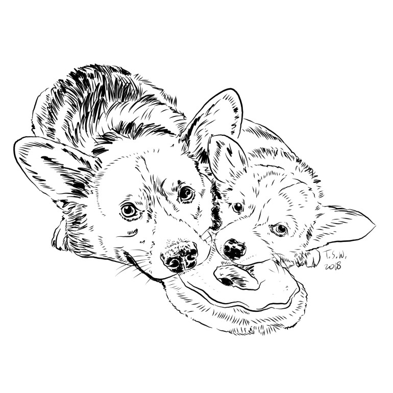 Corgy illustration
