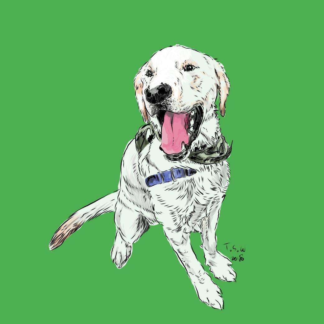 Dog drawing