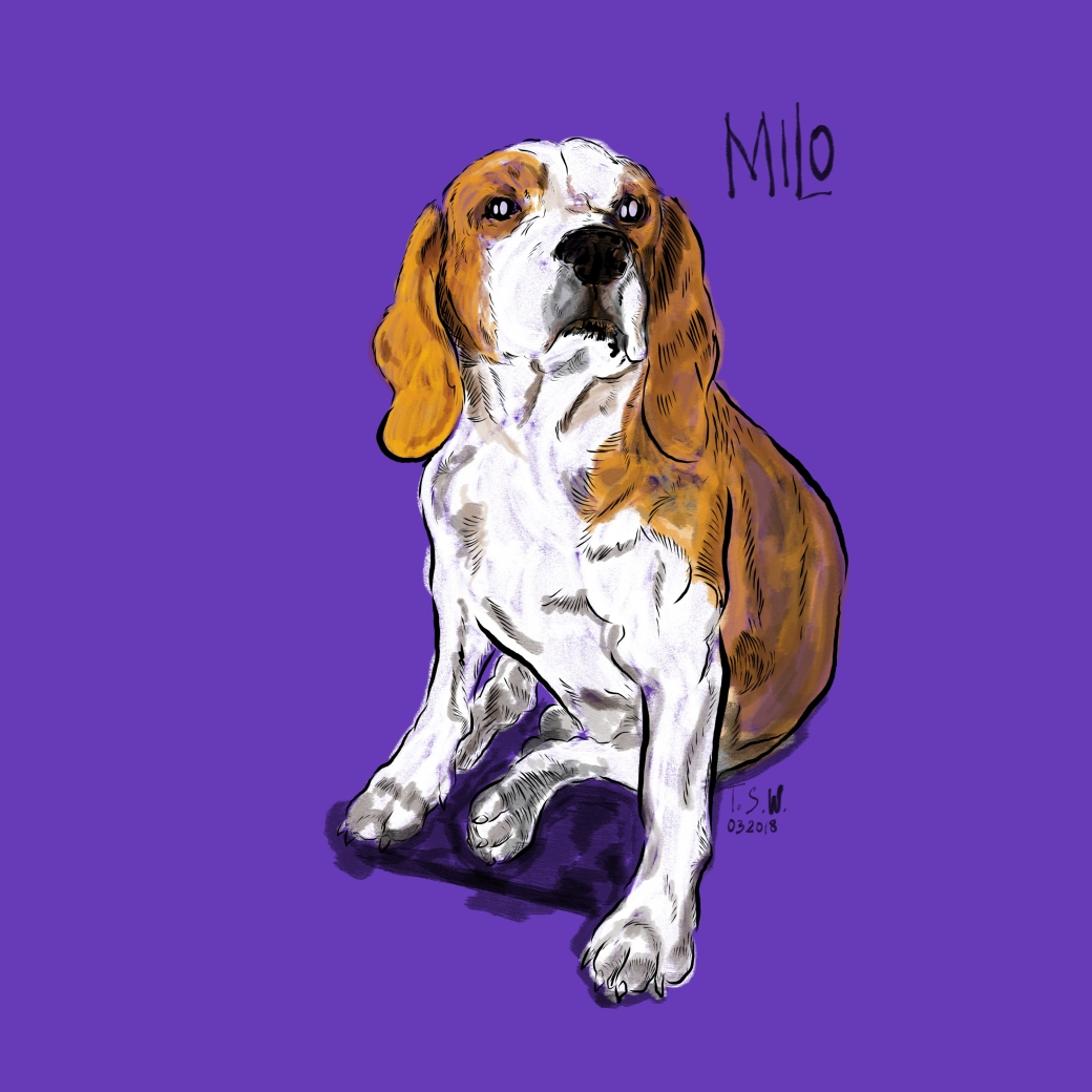 Beagle drawing