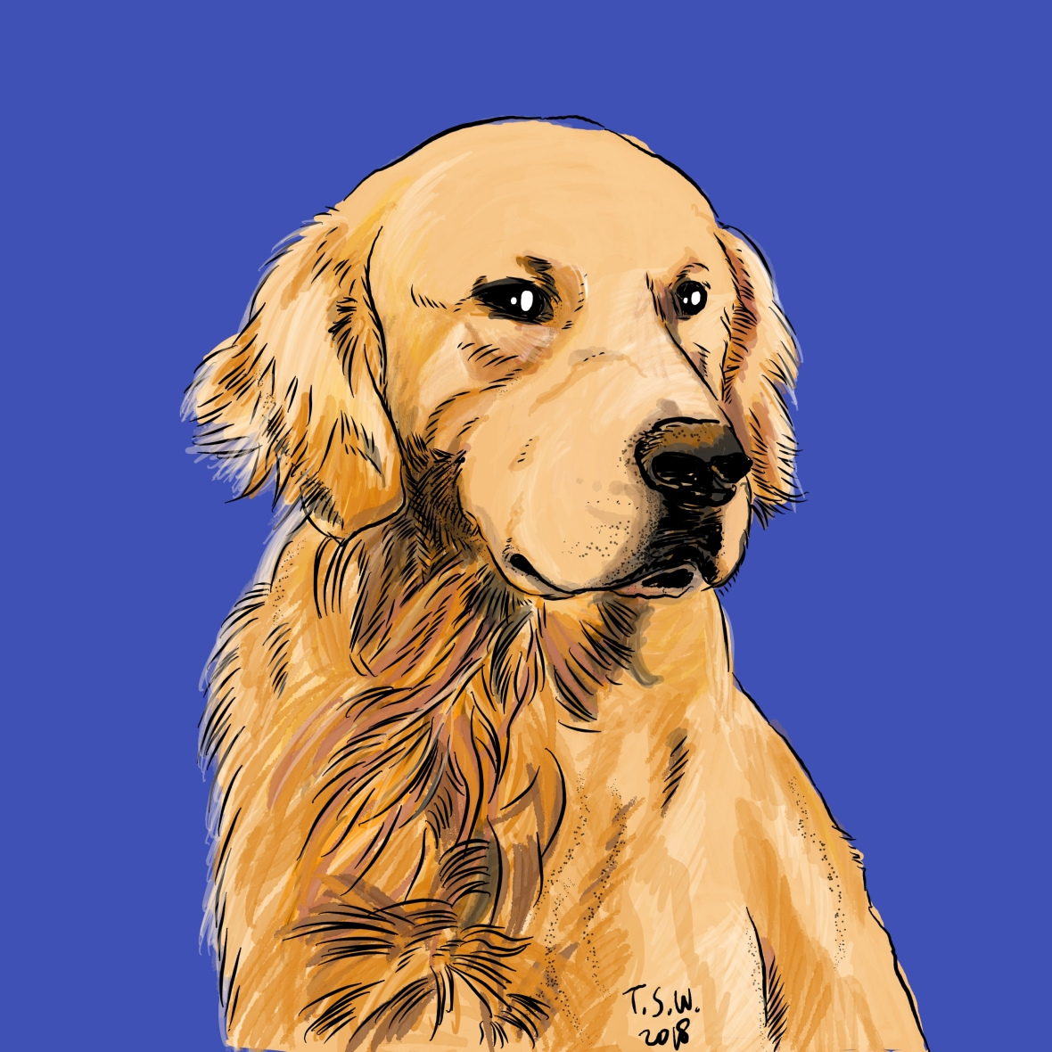 Golden retriever illustration