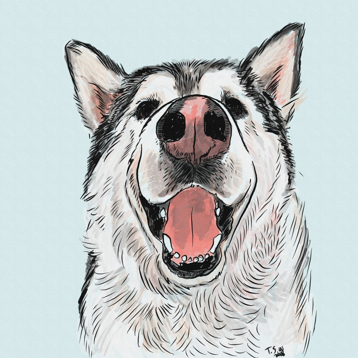 Alaskan Malamute illustration