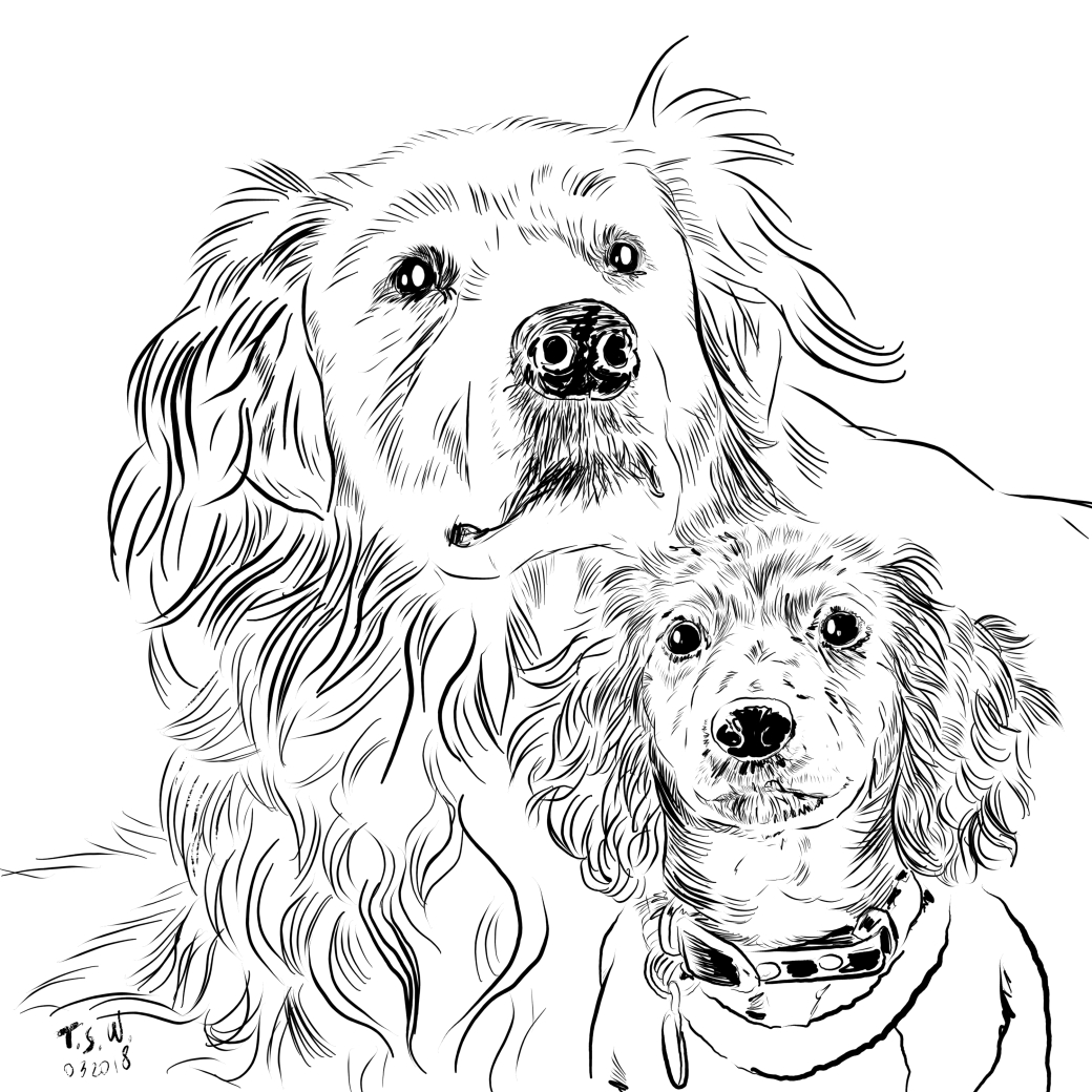 Drawing a dog